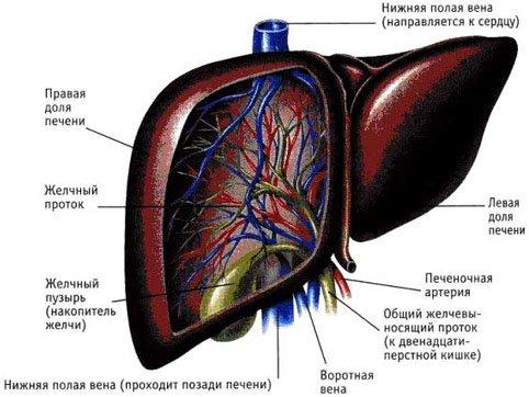 Лечение гепатита а в стационаре